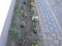Sadzenie kwiatków