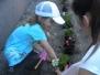 Sadzimy kwiatki